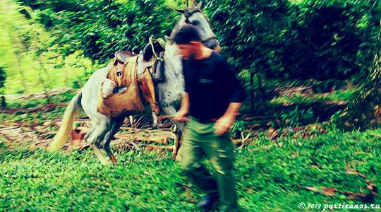 Наездник, объезжающий пони.
